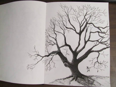 Old Tree sketch done with a pen.