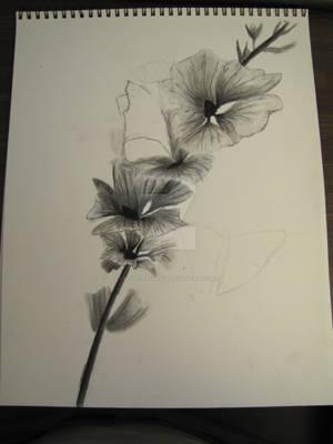 Flower's on a vine