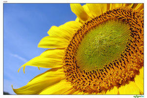 sun by aripel by Ro-nature