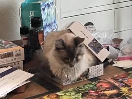 Duchess In A Box