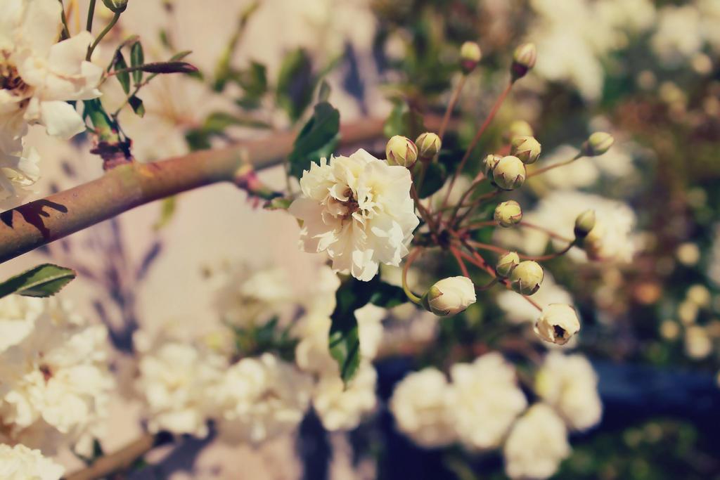 White by Aaloka