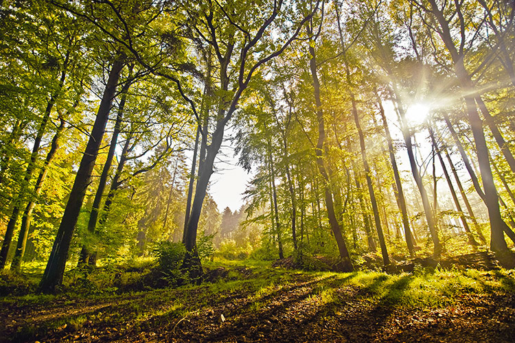 Forestscapes by Ssquared-Photography