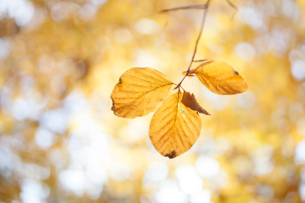 Autumn 2012 - 9 by hombre-cz