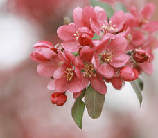 In bloom by gb-photos
