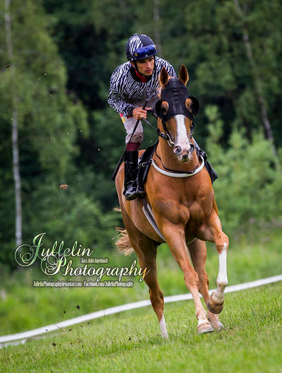 Horse Racing 634 by JullelinPhotography