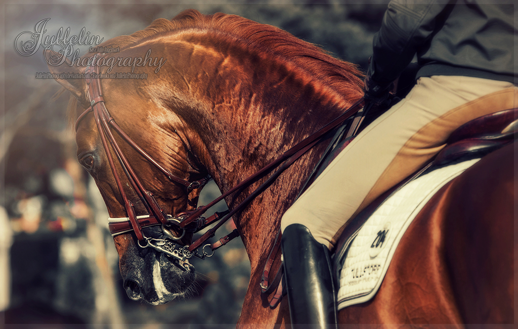 Dressage  47 by JullelinPhotography