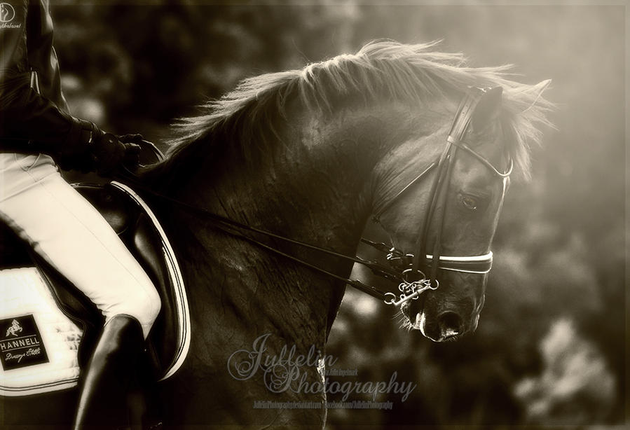 Dressage 49 by JullelinPhotography