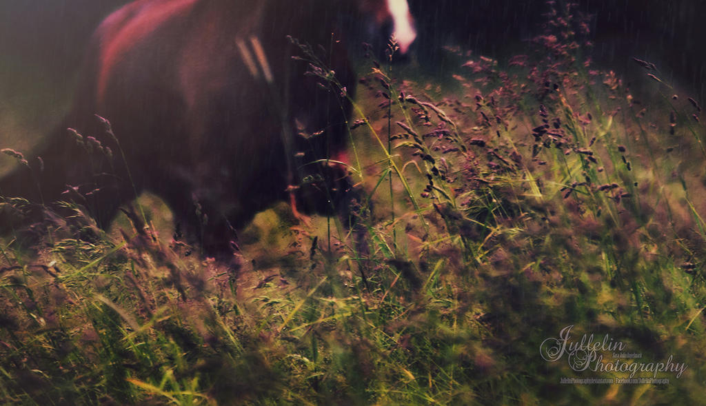 Details of Grass by JullelinPhotography