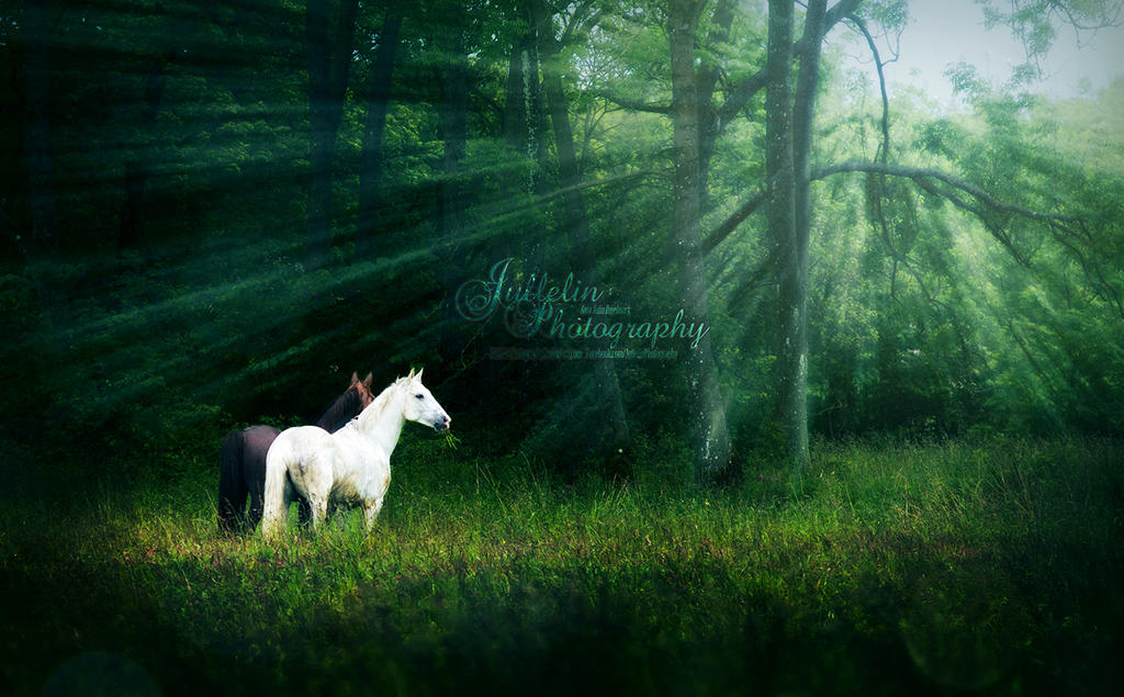 The Magic Field by JullelinPhotography