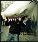 Cwis Shark