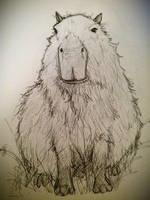Capybara :]