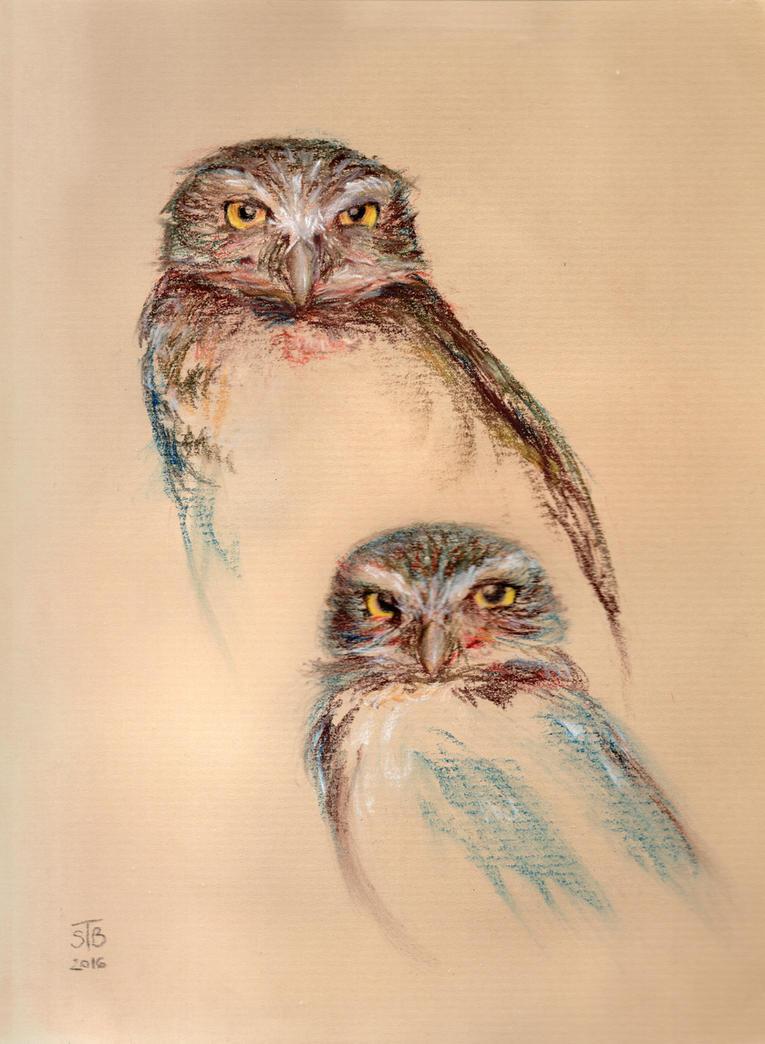 Owl couple by simbalm