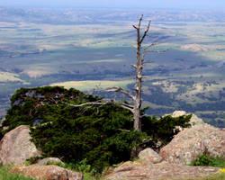 Mountain Tree - landscape by ayla-of-nevyn
