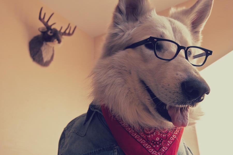 Hipster Dog by JaimePosadas
