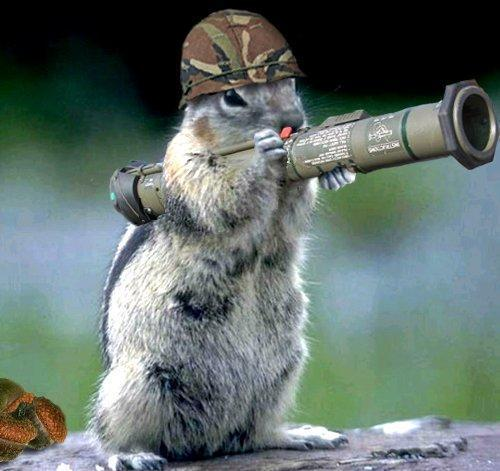 My AT team warming up for Saturday's festivities ARMY_squirrel_by_jonnyx4