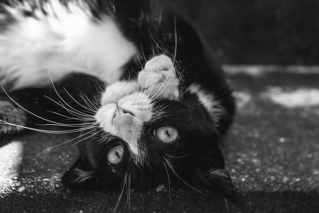 BW Cat by Tiago-Borges