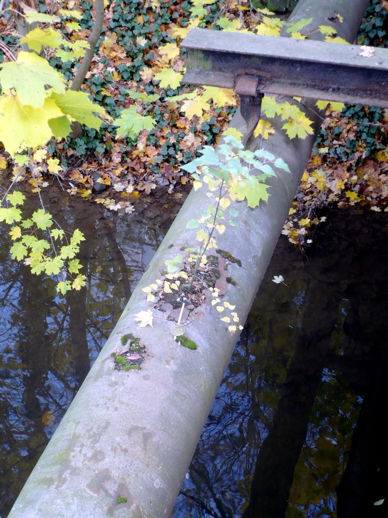 Tree on a pipeline by nplhse