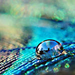view in a drop