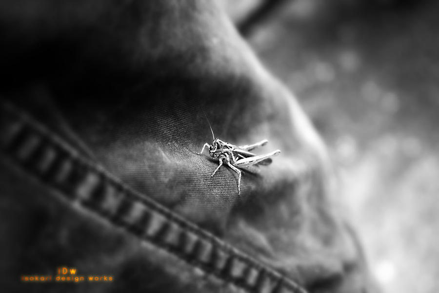 grasshopper by iso-50