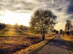 Autumn road 5