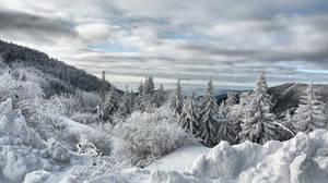 Winter stock 2