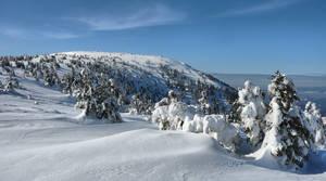 winter stock 3