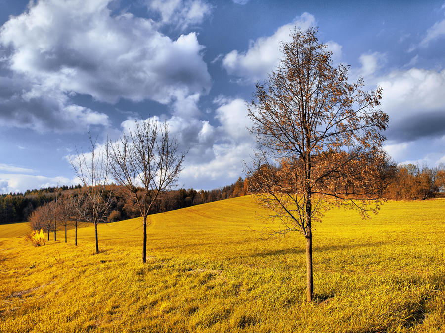 Golden field by FrantisekSpurny