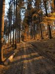 Golden Forest Road