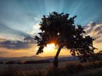 Tree silouthe