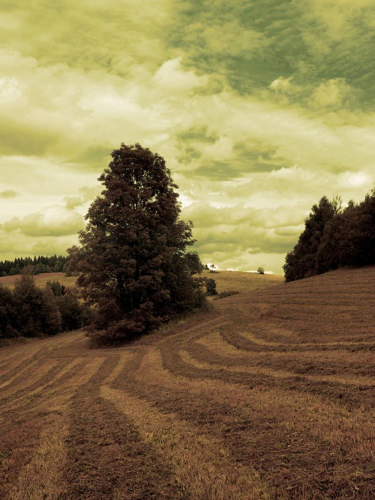 Field 14 by FrantisekSpurny
