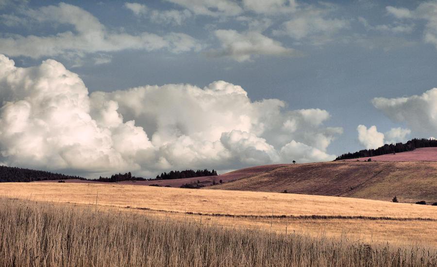 Field 16 by FrantisekSpurny