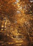 Autumn Road 7