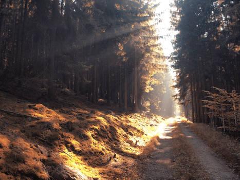 autumn road 8