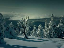 Winter dreams 1 by FrantisekSpurny