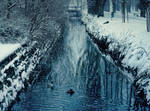 winter park 5