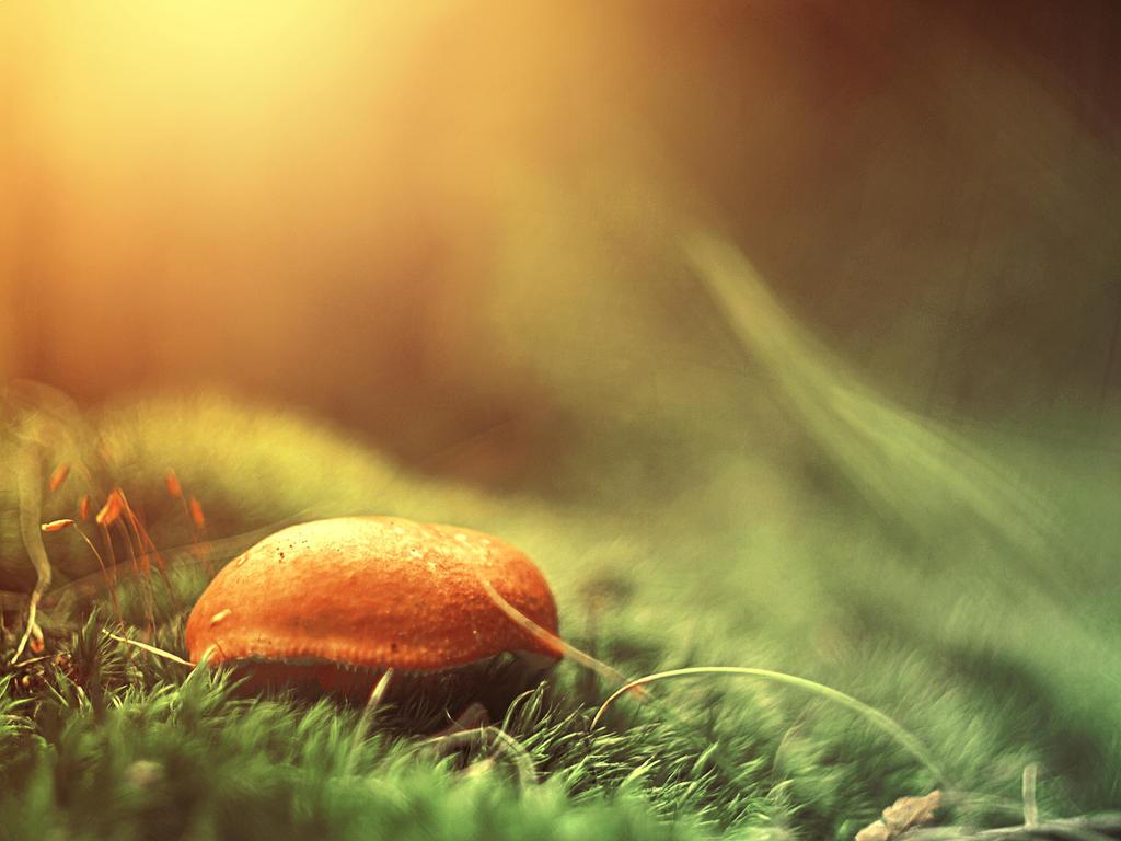 Lovely Mushroom by FrantisekSpurny