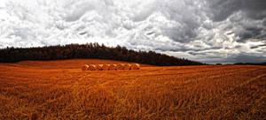 Field panorama stock by FrantisekSpurny