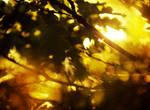 Sunlight in the tree