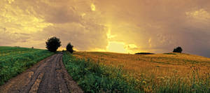 Field panorama stock 4 by FrantisekSpurny