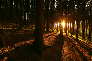 Sunny forest by FrantisekSpurny