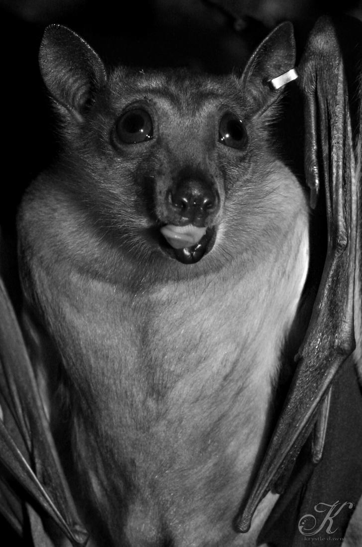 gone batty by krystledawn