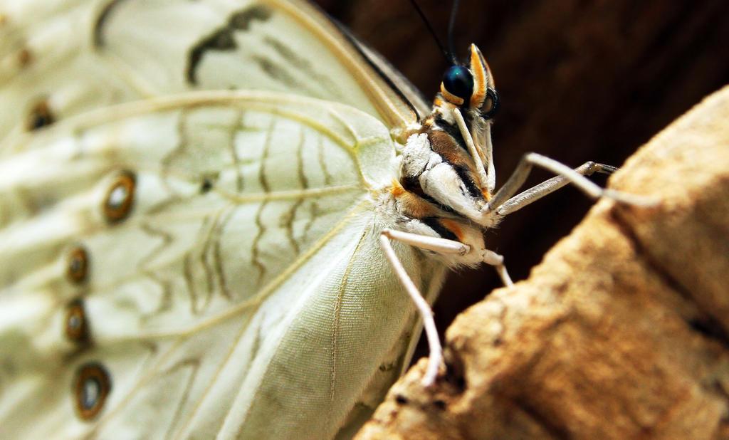 Butterfly by krystledawn