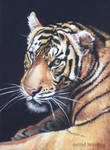 Watching You - Pastel Painting
