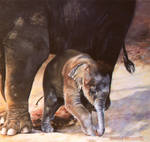 Baby Elephant Walk - PASTEL PAINTING by AstridBruning