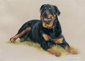 TYSON - PASTEL by AstridBruning
