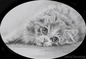 Wide-Eyed Beauty - 2 x 3 inch Pencil by AstridBruning