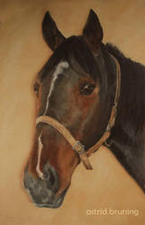 Dan's Trotter - Oil Painting by AstridBruning