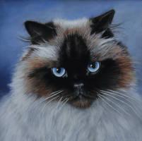 Fudgee -  Pastel Painting by AstridBruning