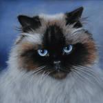 Fudgee -  Pastel Painting