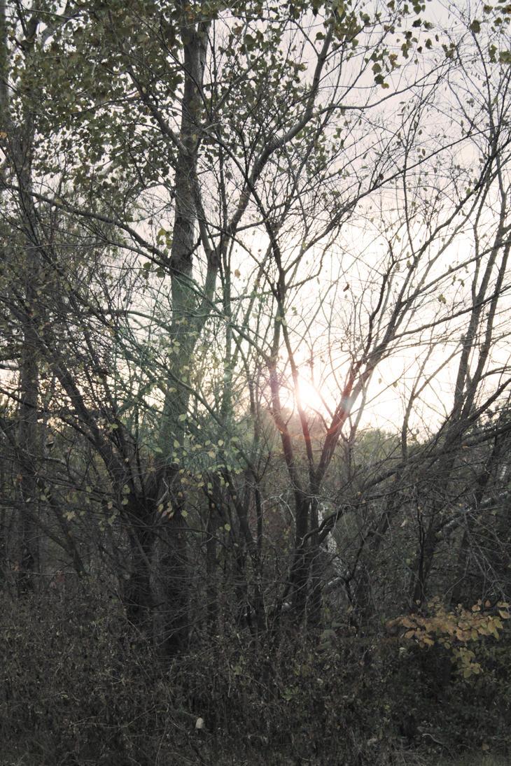 Hello, Sunshine by DressageArtisan